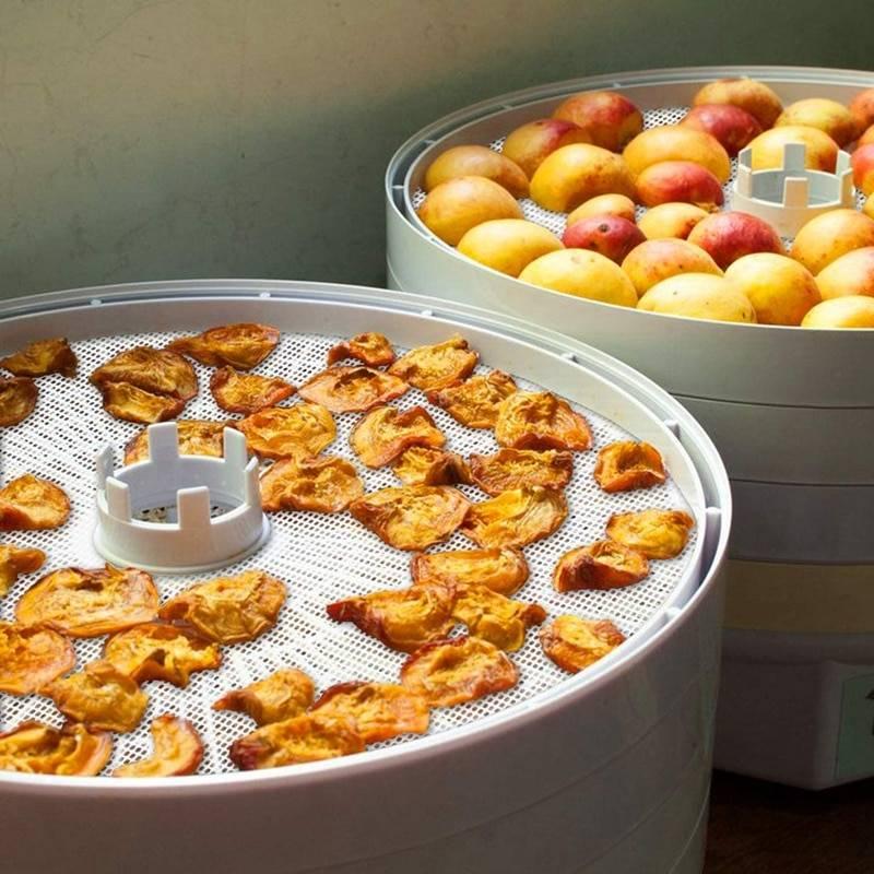 Сушим фрукты в домашних условиях: основные правила сушки