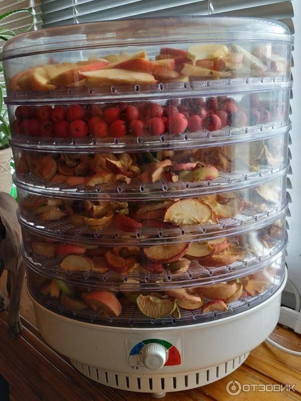 Какие фрукты и овощи можно сушить в электросушилке
