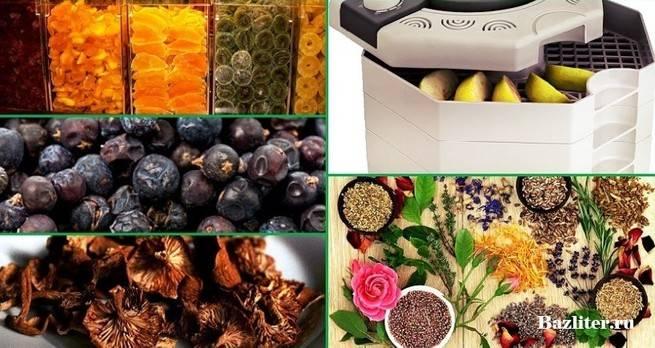 Как сушить в электросушилке овощи, фрукты и ягоды. совет
