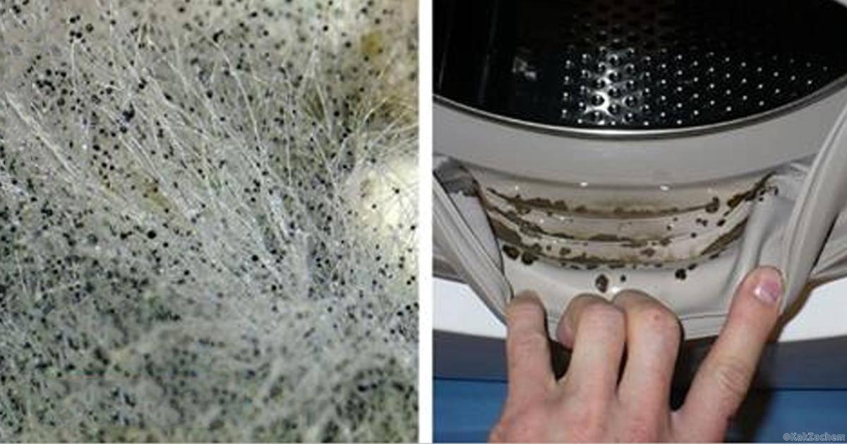 Как быстро избавиться от плесени в стиральной машине?