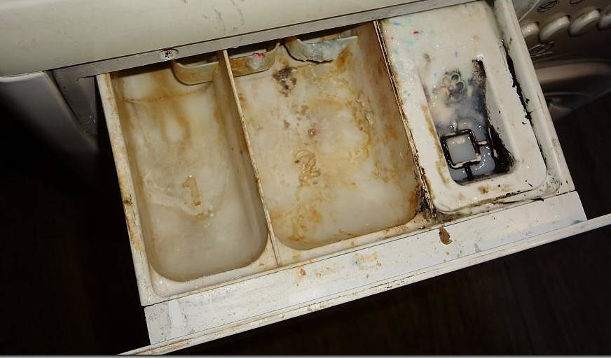 Плесень в стиральной машине: простые советы по устранению в домашних условиях