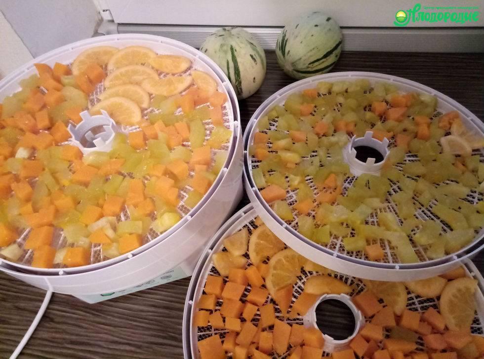 Сушка плодов, овощей и зелени: рецепты и видео, показывающее технологию процесса в домашних условиях