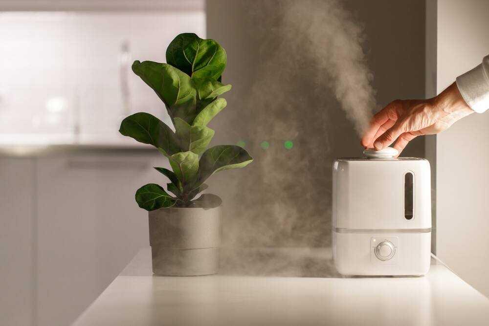 Увлажнители воздуха: польза и вред, отзывы врачей   beton-area.com